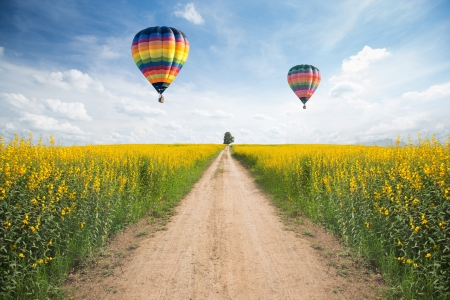 Yellow flower field with a road and balloon on sky photo