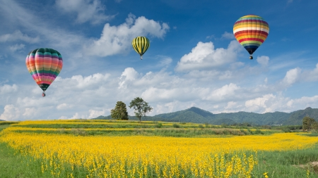 Hot air balloon over yellow flower fields against blue sky photo