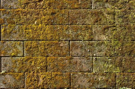 mossy on old wall photo