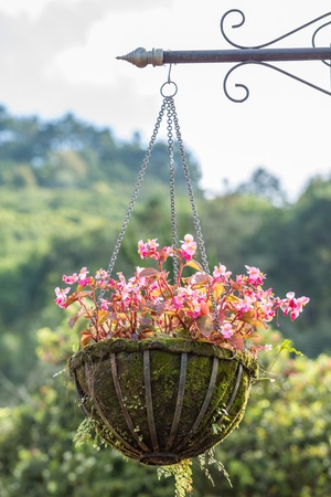 hanging basket: Hanging basket of beautiful flowers Stock Photo