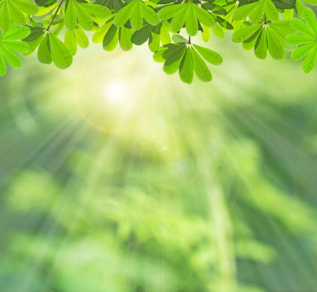 Green leaf in summer  Stock Photo - 25301164