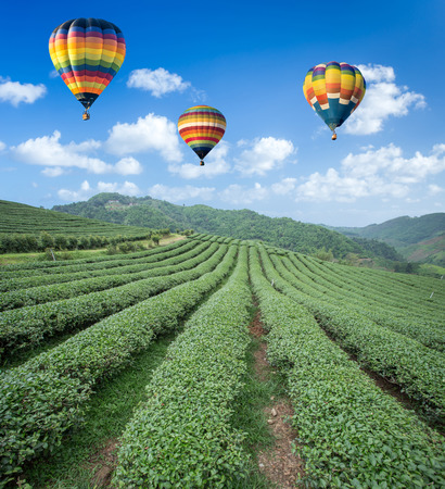 Hot air balloon over Tea plantation with blue sky background