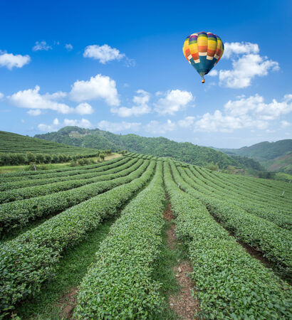 Hot air balloon over Tea plantation with blue sky background photo