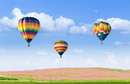 hot spring: Hot air balloon over pink cosmos fields with blue sky background