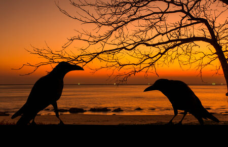 horror background: Silhouette crow and dead tree at sunset for halloween background