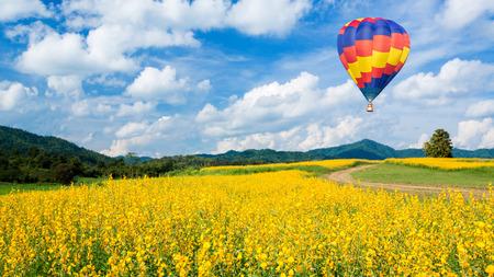 caliente: Globo de aire caliente sobre campos de flores amarillas y el cielo azul de fondo