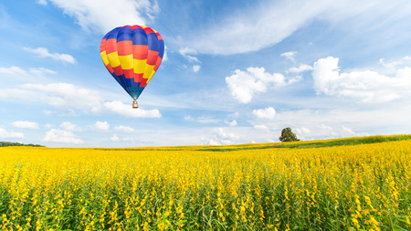 hot spring: Hot air balloon over yellow flower fields against blue sky