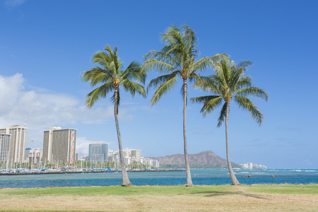 diamond head: Palm tree with Diamond head mountain background, Hawaii