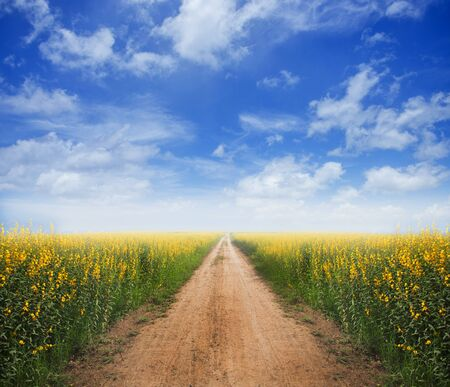 Dirt road with yellow flower fields