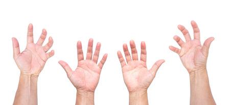 Equipaggi le mani, le mani aperte, mani che afferrano isolato su fondo bianco