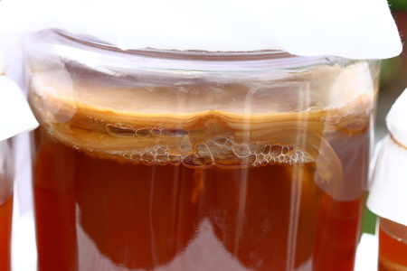 Glass jar of Kombucha scoby. fermented tea in garden Standard-Bild