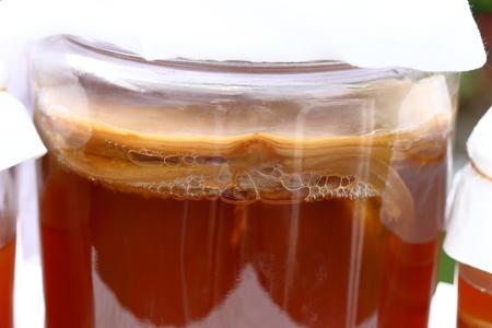 Glass jar of Kombucha scoby. fermented tea in garden Stock Photo