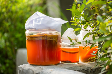Glass jar of Kombucha fermented tea in garden