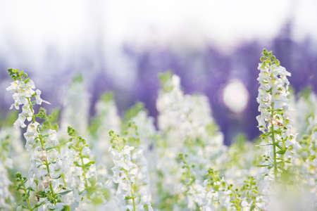 dof: white flowers shallow DOF