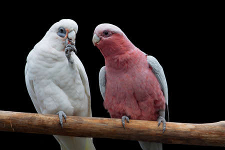brigth: Parrots from the Moscow Zoo Stock Photo