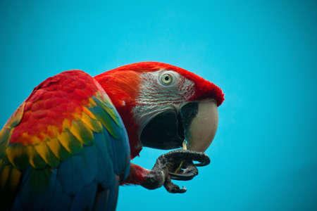 brigth: Macaw parrot  from the Moscow Zoo