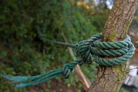 Green rope hanging a tree