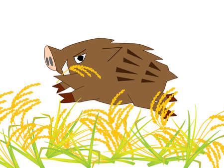 wild boar: Wild boar ravaging eat rice Illustration