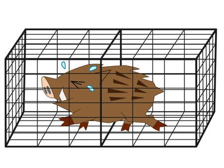 wild boar: Wild boar was captured