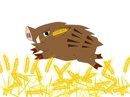 Wild boar ravaging wheat fields