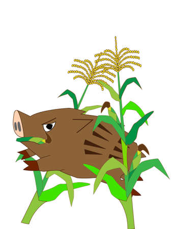 capturing: Wild boar ravaging maize field