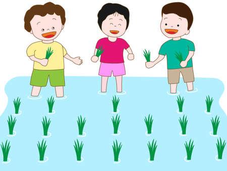 paddy field: Kids  farm