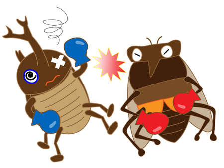 sap: Insect boxing