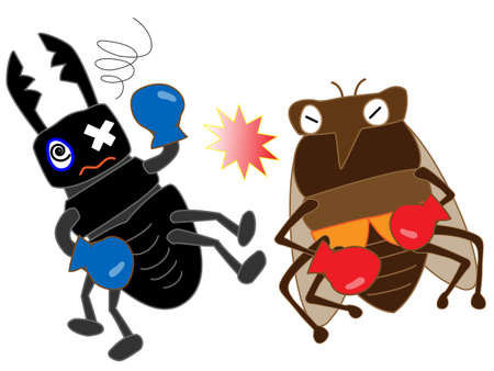 stag beetle: Insect boxing