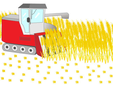 combine: Harvested by combine harvester