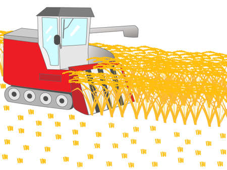paddy field: Harvesting using combine harvester