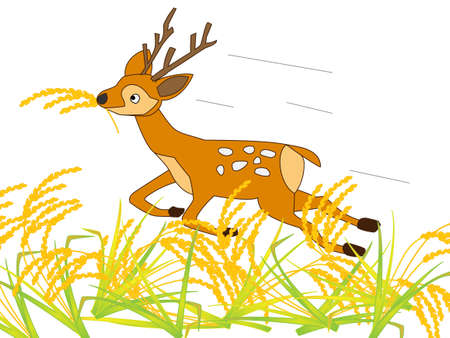 harvesting rice: Deer voracious rice
