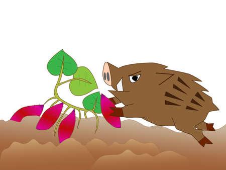Wild boar voracious crops. Illustration