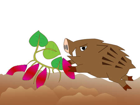 voracious: Wild boar voracious crops. Illustration