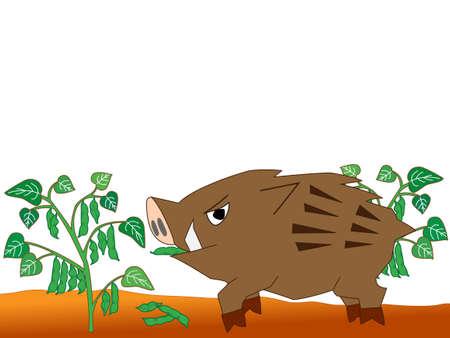 wild boar: Wild boar voracious crops. Illustration