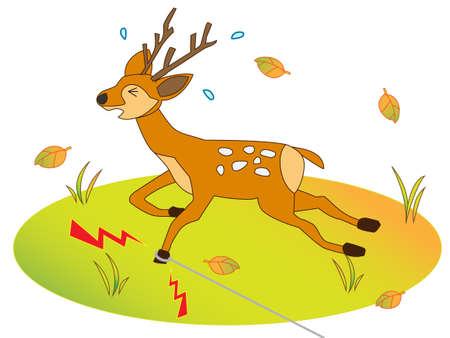 Deer were captured