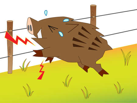 Wild boar touching electric fence