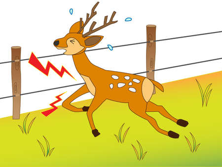 Touching the electrified fence deer