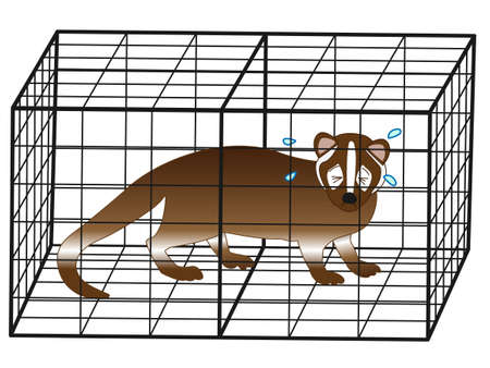 The captured Civet Illustration