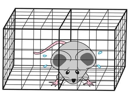 mice captured