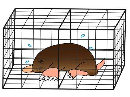 moles: Captured moles