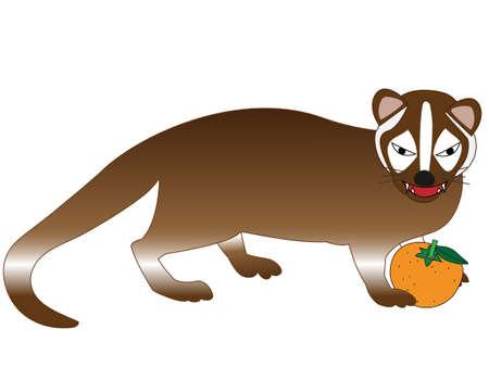 The Masked Palm Civet eating oranges Illustration