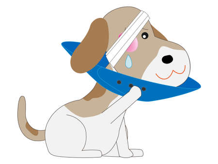 Pets are treated in a veterinary hospital