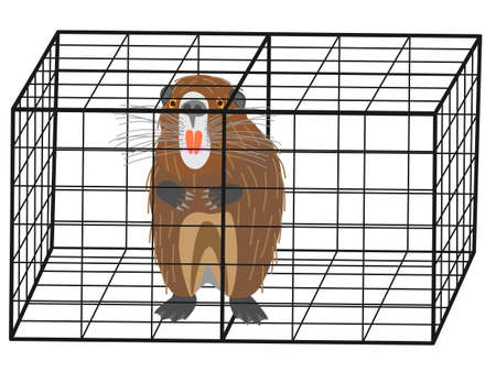 Captured and nutria Illustration