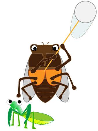 Cicada insect Illustration