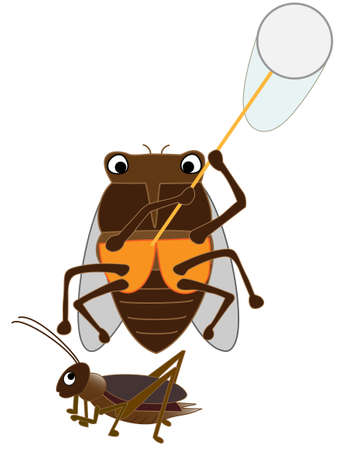 Cicada insect. Illustration