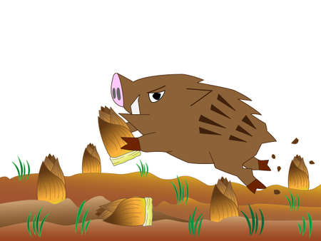 Wild boar ravaging, eating bamboo shoots Illustration