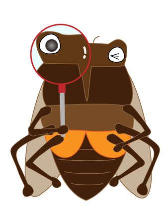 Insectes trouvés dans la loupe.