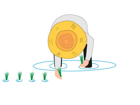 Farmers have planted seedlings in rice's work. Vector Illustration