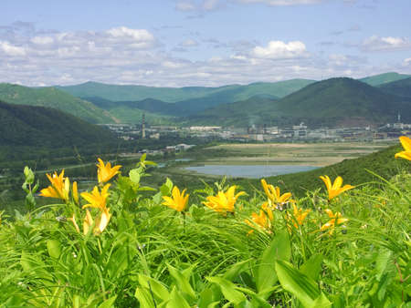 blossom lily on declivity of the mountain