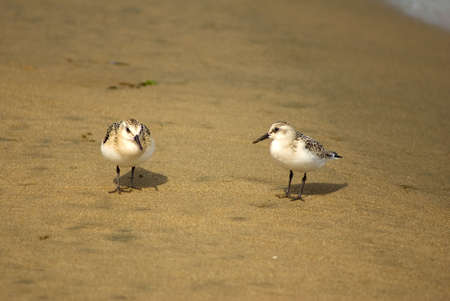 small birds in quest of foods on beach photo